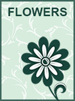 Mother's Day: Flowers