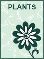 Mother's Day: Plants
