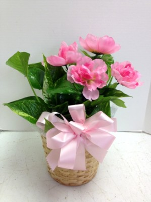plant and pink