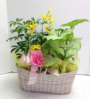 Think Green Plants