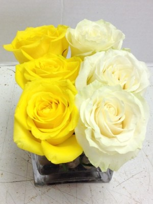 6 roses yellow and white