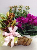 flower basket plants