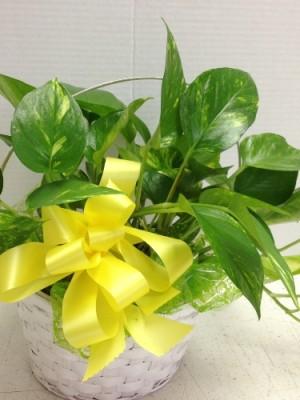 plant for horrall family