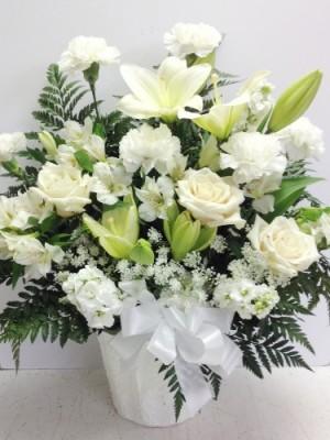 Fraternity of White Wonder Flowers