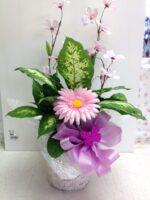 Her Happy Plant