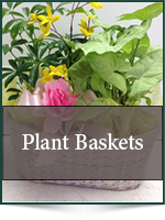 Plants: Plant Baskets