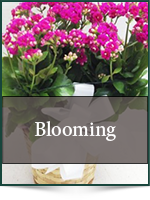 Plants: Blooming