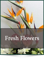 Corporate: Fresh Flowers