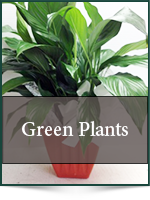 Plants: Green