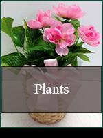 Baby: Plants