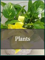 Birthday: Plants