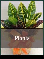 Corporate: Plants