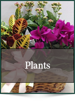 For Her: Plants