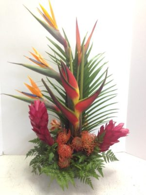 Tropicals and More
