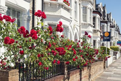 Rose gardens in London English homes