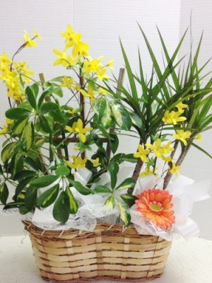 Assorted Green Plants