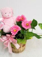 Baby Marina Plant